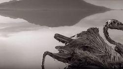 Λίμνη Νάτρον: Η λίμνη του θανάτου και των