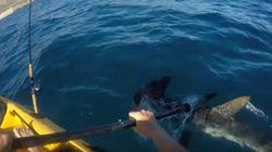 Τρόμος στη Σάντα Μπάρμπαρα: Σφυροκέφαλος καρχαρίας επιτίθεται σε ψαρά με