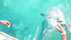 Πανέξυπνο δελφίνι επιστρέφει σε μαζορέτα του NBA το κινητό της από τον βυθό του Ατλαντικού