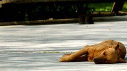 BBC: Περισσότερα από 1 εκατομμύρια αδέσποτα σκυλιά θύματα της ελληνικής
