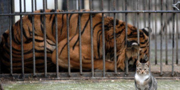 Στις ΗΠΑ πέθανε ο Φοίβος, ο Τίγρης των