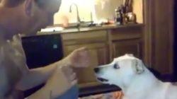Το μαγικό τρικ ενός άνδρα και η «όλα τα λεφτά» αντίδραση του σκύλου