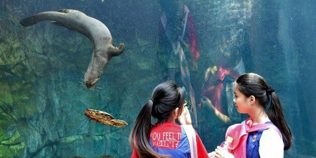Students watch an otter swimming in an aquarium at the Wild Reserve Singapore (WRS) zoo on May 21, 2015....
