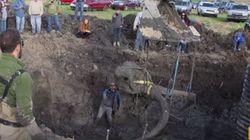 Αγρότης βρήκε σκελετό μαμούθ στο χωράφι