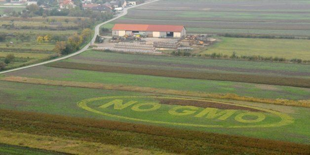 The inscription 'NO GMO' (genetically modified organism) is drawn at a cornfield in Vienna, Austria,...