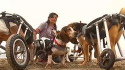 Το καταφύγιο σκύλων που δίνει αναπηρικές καρέκλες σε όσα σκυλάκια είναι