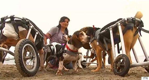 Θα δακρύσετε: Παρέχουν αναπηρικές καρέκλες σε όσα σκυλάκια είναι
