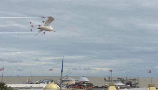 Αυτός ο γλάρος έκλεψε την παράσταση σε αεροπορική επίδειξη στη Μεγάλη