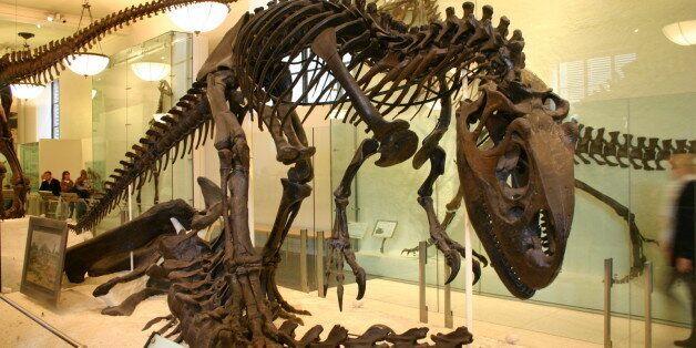 Αγοράστε έναν αληθινό δεινόσαυρο με λιγότερα από ένα εκατομμύριο