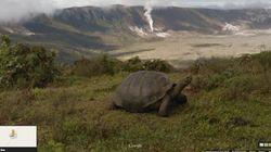 Google: Όταν οι ελέφαντες της Κένυας και οι χελώνες των Γκαλαπάγκος «εισέβαλαν» στο Street