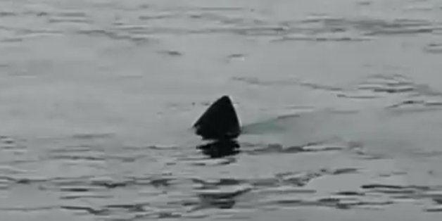 Ψάρευαν ήσυχοι αστακούς όταν «πάγωσαν» βλέποντας τον τεράστιο καρχαρία δίπλα