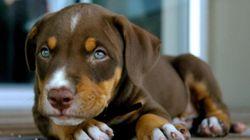 20 πανέμορφα σκυλιά που δεν είναι σαν όλα τα άλλα (και άλλες 4 ειδήσεις που θα σας