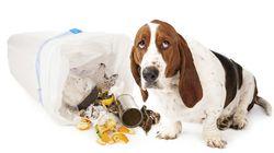 Νιώθουν οι σκύλοι ενοχές; Η επιστήμη έχει την