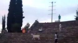 Κατσίκα εισέβαλε σε θέατρο της αρχαίας Ολυμπίας και προκάλεσε