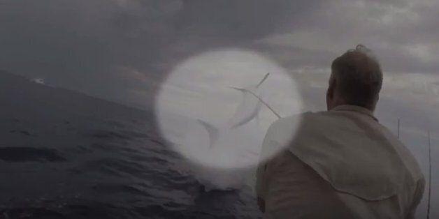 Καρχαρίας «πηδά» 3,5 μέτρα έξω από το νερό και παγώνει το αίμα ενός