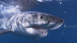 WSJ: Τα σαγόνια του καρχαρία δεν είναι τόσο επικίνδυνα όσο θέλουμε να