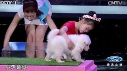 H Κινεζούλα που συγκλονίζει: Κατάφερε να υπνωτίσει 5 ζώα σε λιγότερο από 4