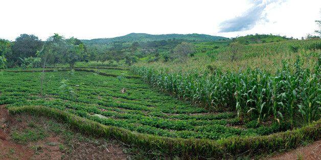 Αρχαιολογική έρευνα αποδεικνύει ότι η μετάβαση στη γεωργία έγινε νωρίτερα από ότι