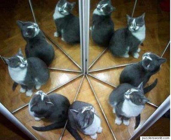 Η φωτογραφία που διχάζει: Εσείς πόσες γάτες βλέπετε σε αυτή τη