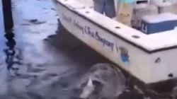 Αλιγάτορας του «έκλεψε» την ψαριά μέσα από το...