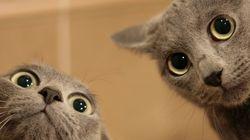 Διάλειμμα από την πραγματικότητα: 26 ξεκαρδιστικά GIF με ζώα για να γελάσουμε και