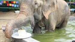 Ένα χρόνο πριν αυτός ο ελέφαντας ήταν αλυσοδεμένος και