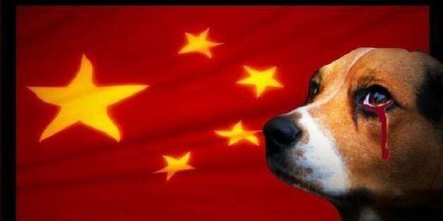 Οι σκύλοι είναι φίλοι μας και όχι φαγητό – Αντιδράσεις για το φεστιβάλ κατανάλωσης σκυλίσιου κρέατος...