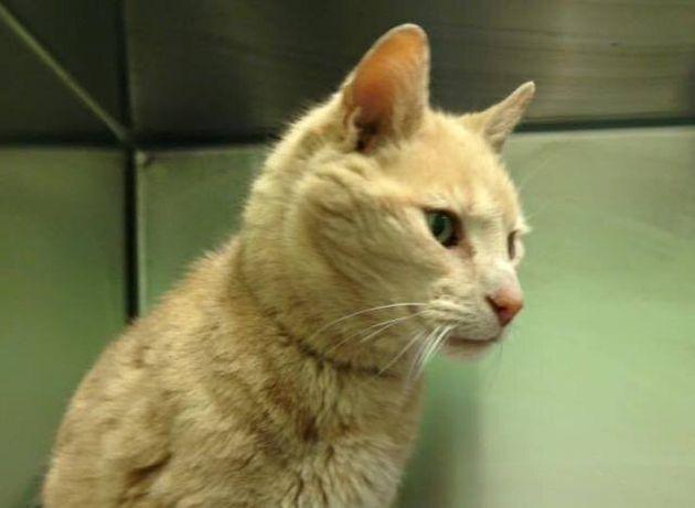 Γάτα 25 ετών ταξίδεψε από την Αυστραλία μέχρι την