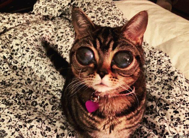 Η επέλαση των ζώων: Η γάτα με τα εξωγήινα μάτια και άλλες 4 απίθανες ιστορίες με ζώα που έγιναν