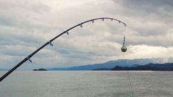 10χρονο κορίτσι έπιασε γιγαντιαίο ψάρι 150 κιλών στην