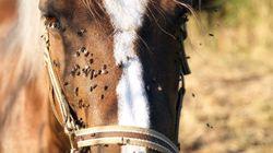 Ιωάννινα: Φρίκη, άγνωστοι ακρωτηρίασαν αλογάκι – Κανείς κτηνίατρος δεν