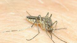Ερευνητές εξετάζουν μυστηριώδη ασθένεια που μεταδίδεται μέσω