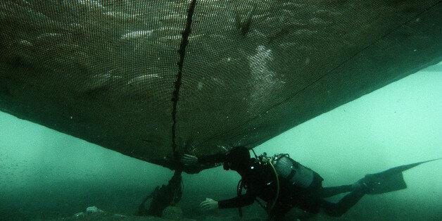 πολλά ψάρια που χρονολογούνται από το site απλές εφαρμογές γνωριμιών