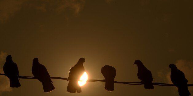 Pigeons are silhouetted against the sun, during sunset in San Salvador, on March 27, 2015. AFP PHOTO...