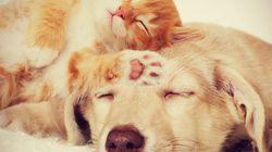 Les chats et les chiens peuvent bien s'entendre, en voici la preuve