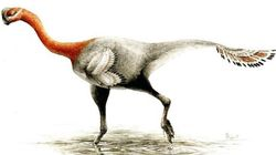 Un dinosaure ailé identifié en