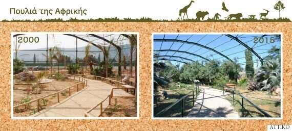 Tο Αττικό Ζωολογικό Πάρκο γίνεται 15 χρονών και