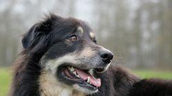 Ο αρχαιότερος φίλος του ανθρώπου: Επιστήμονες εκτιμούν πως οι σκύλοι είναι κατοικίδια εδώ και 40.000