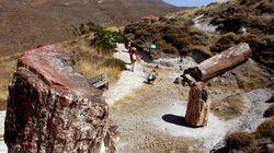 Νέο απολιθωμένο δάσος αποκαλύφθηκε στη