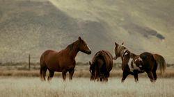 Σκληρές εικόνες: Σκότωσαν οκτώ άγρια άλογα στη Ζήρεια