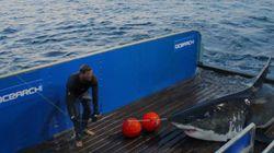 Αυτή τη στιγμή υπάρχει ένας καρχαρίας στον Ατλαντικό ωκεανό που