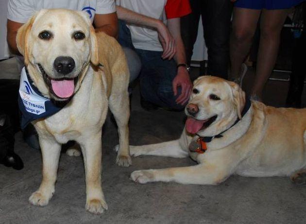 «Λάρα»: Η Ελληνική Σχολή Εκπαίδευσης Σκύλων – Οδηγών για άτομα με απώλεια