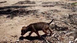 26 σκυλιά νεκρά από φόλες στο Κεφαλόβρυσο