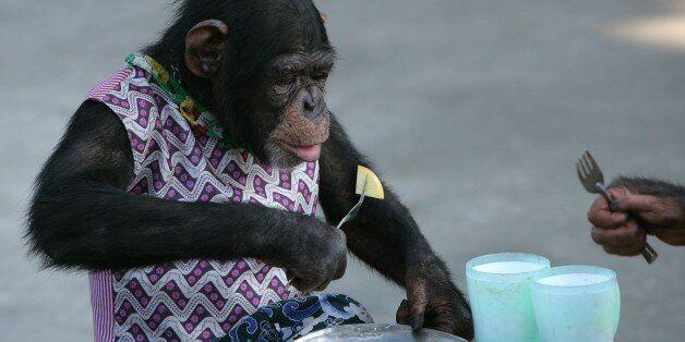 Έντονες αντιδράσεις για την εκτέλεση της Εύας, του θηλυκού χιμπατζή που το έσκασε από το ζωολογικό κήπο...