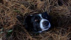 «Που είναι ο Μόμο;»: Εσείς μπορείτε να εντοπίσετε τον σκύλο στις