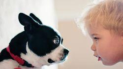 Ένα βλέμμα του σκύλου σας αρκεί για να σας σκλαβώσει (και το