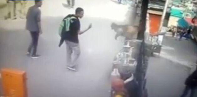 Έτσι...τιμωρεί ο πίθηκος: Επιτέθηκε πηδώντας στο πρόσωπο εφήβου που του «έδειξε το