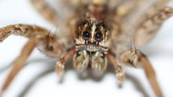 Σκότωσε μία αράχνη και εμφανίστηκαν δεκάδες