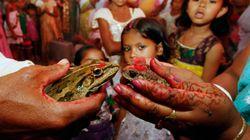 カエルがスピード離婚。雨乞いのために結婚し、新婚2カ月で豪雨に