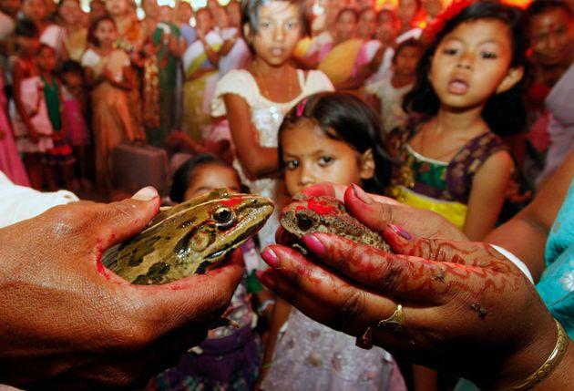 カエルの結婚(2013年、インド)
